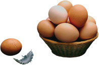 eggs in basket with feathersmall.jpg (10559 bytes)